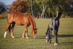 Hästar i natur på solig varm dag royaltyfria bilder