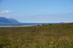 Hästar i norr Island Royaltyfri Bild
