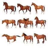 Hästar i olikt poserar royaltyfri illustrationer