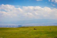 Hästar i sceniska kyrgyz berg Arkivfoto