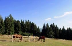 Hästar i skogen Fotografering för Bildbyråer