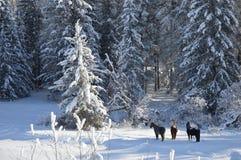 Hästar i skogen på en vintermorgon Royaltyfri Bild