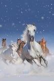 hästar i snow Arkivbild