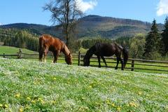 Hästar i solskenet arkivfoto