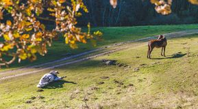 Hästar i sommartid nära en skog royaltyfria bilder