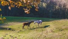 Hästar i sommartid nära ett skogsamtal fotografering för bildbyråer