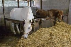 Hästar i stallen arkivbilder