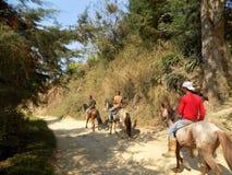 Hästar i vägen Avila cowboyer Royaltyfri Fotografi
