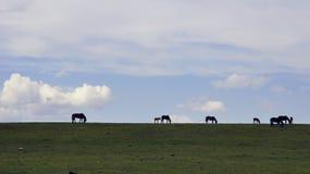 Hästar i Yili prarie i Xinjiang royaltyfria bilder