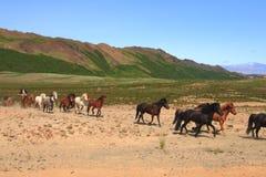 hästar iceland arkivfoton