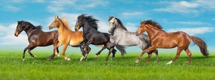 Hästar kör fastar på fält royaltyfri fotografi