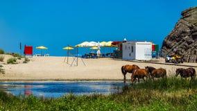 Hästar längs kusten av floden Veleka till Sinemorets lökformig Arkivfoto