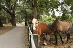 Hästar längs staketet Arkivfoto