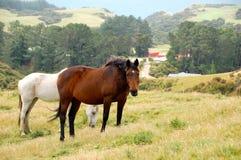 Hästar landskap Fotografering för Bildbyråer