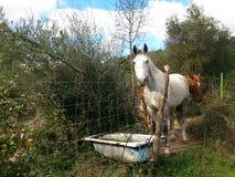 hästar med badkaret Royaltyfri Bild