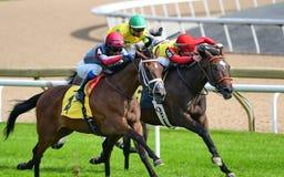 Hästar med jockey som heading till fullföljandet Royaltyfri Foto