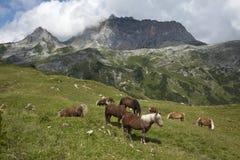 Hästar med Rote trollstavområde royaltyfri bild