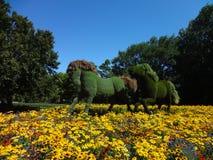 Hästar med växthud Botanisk trädgård av Montreal Kanada royaltyfri fotografi