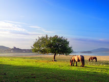 Hästar nära Nanclares de Gamboa Royaltyfri Bild