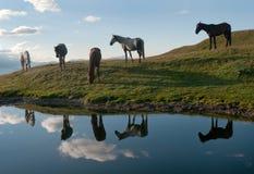 Hästar near laken Royaltyfri Foto