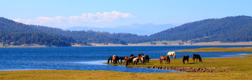 Hästar near sjön Royaltyfria Bilder