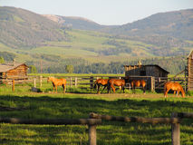 Hästar och ett stall med en bakgrund av berg Skjutit på den storslagna Teton nationalparken, USA Fotografering för Bildbyråer