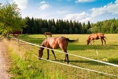 Hästar och föl på lantgården arkivfoto
