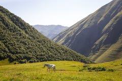 Hästar och folk på bergvägar av Georgia royaltyfri bild