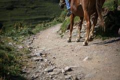 Hästar och folk på bergvägar av Georgia arkivbild