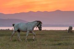 Hästar och härlig solnedgång royaltyfria bilder