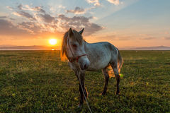 Hästar och härlig solnedgång arkivfoto