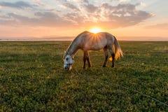 Hästar och härlig solnedgång royaltyfri foto