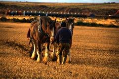 Hästar och plöjer lineing upp till plöjer fältet Royaltyfri Bild