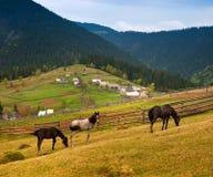 Hästar och staket längs en landsväg i by. Royaltyfri Fotografi
