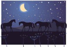 Hästar och stjärnor Royaltyfria Foton