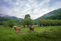 Hästar på bergäng Royaltyfri Foto