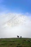 Hästar på dimmiga berg royaltyfri foto
