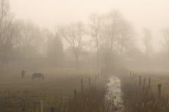 Hästar på dimmig morgon Royaltyfria Foton