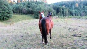 Hästar på en ferie Arkivfoto