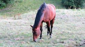 Hästar på en ferie Royaltyfri Bild