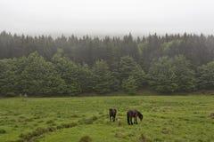 Hästar på en grön äng 4 Arkivfoto