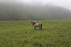 Hästar på en grön äng 7 Arkivfoto