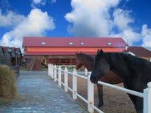 Hästar på en härlig lantgård Arkivfoton