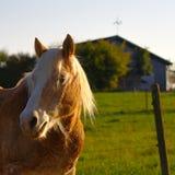 Hästar på en lantgård royaltyfri bild