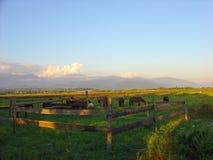 Hästar på en lantgård Fotografering för Bildbyråer