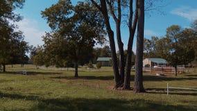 Hästar på en lantgård i Oklahoma - land-stil stock video