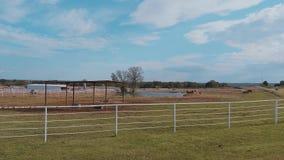 Hästar på en lantgård i Oklahoma - land-stil arkivfilmer