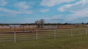 Hästar på en lantgård i Oklahoma - land-stil lager videofilmer
