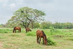Hästar på en lantgård med grönt gräs Arkivfoto