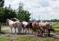 Hästar på ett fält Arkivfoton